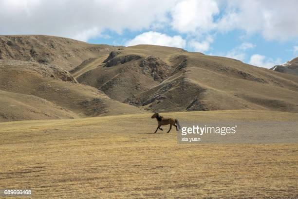 Wild horse running on rolling prairie fields,Bayanbulak Grassland,China
