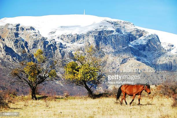 Wild horse with snowy mountain peak in background