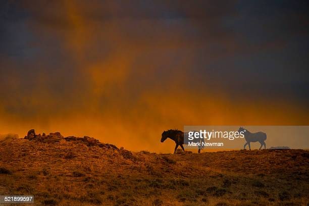 Wild horses and sunset sky