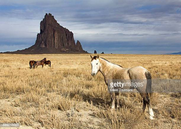 wild horses at shiprock - new mexico stock pictures, royalty-free photos & images