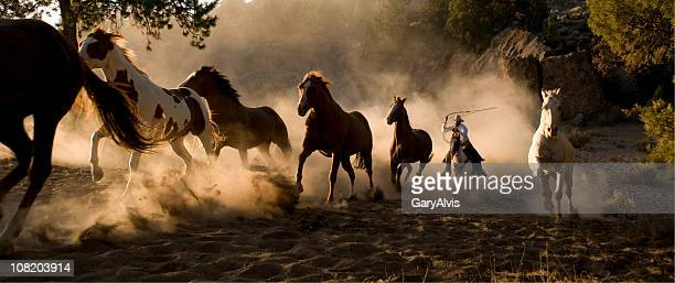 wild horses being chases by cowboy with lasso - animals in the wild stock pictures, royalty-free photos & images