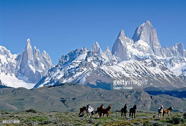 Wild Horses Below Mount Fitz Roy