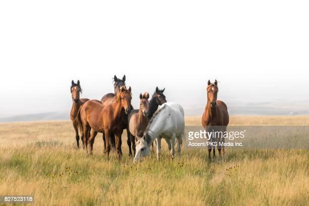 Wild horses congregate on hillside above badlands