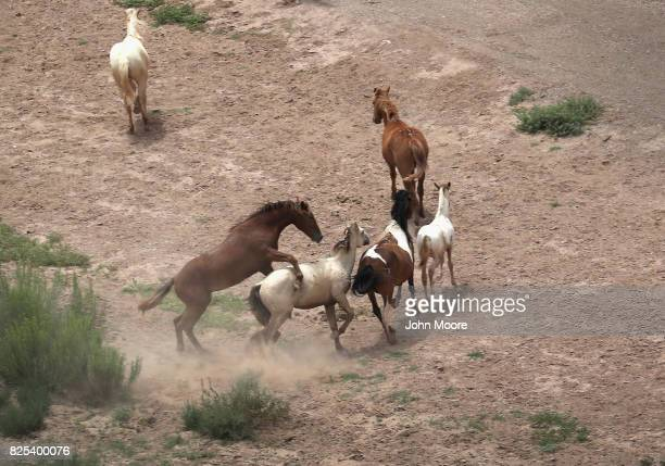 Wild horses frolic next to the Rio Grande which forms the USMexico border as seen from a US Customs and Border Protection helicopter on August 1 2017...