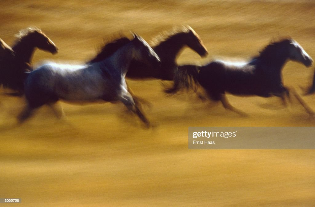 Wild horses gallop across countryside in a blur of speed. Creation Book and Colour Photography book.
