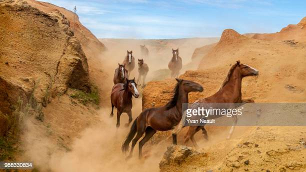 wild horses galloping in the canyons of rano raraku, rapa nui national park, easter island, chile. - horse easter stock pictures, royalty-free photos & images
