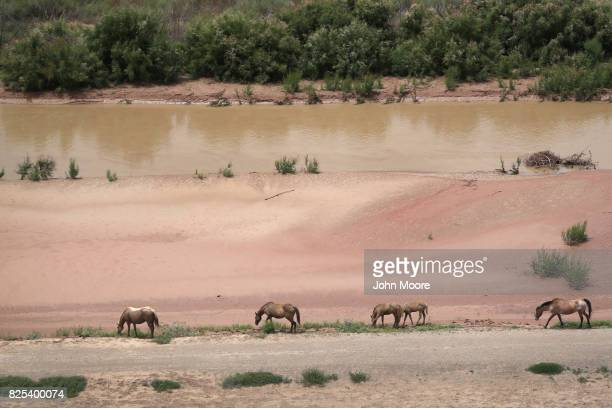 Wild horses graze next to the Rio Grande which forms the USMexico border as seen from a US Customs and Border Protection helicopter on August 1 2017...