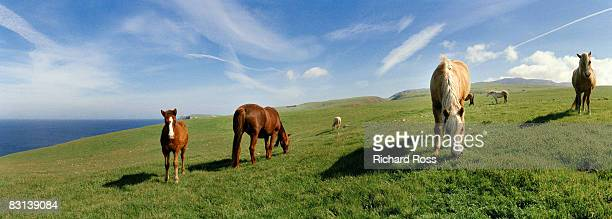 wild horses grazing on an island with blue sky