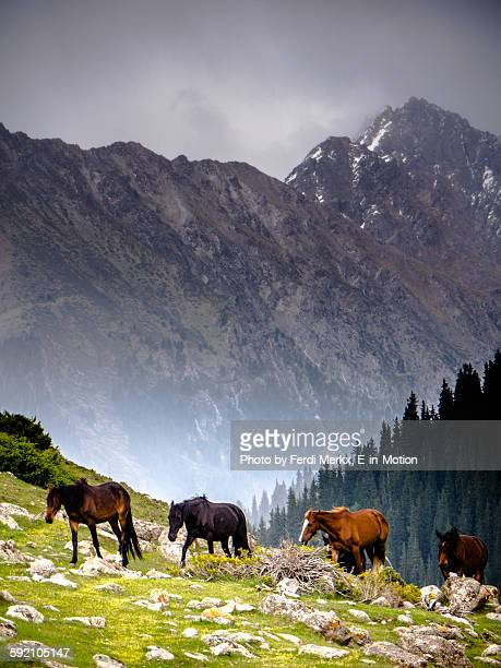 wild horses in jeti oguz - kyrgyzstan stock pictures, royalty-free photos & images
