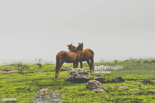 wild horses in north eastern south african countryside in mpumulanga province - マプマランガ州 ストックフォトと画像