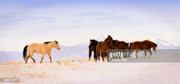 Wild Horses In The Rocky Mountains