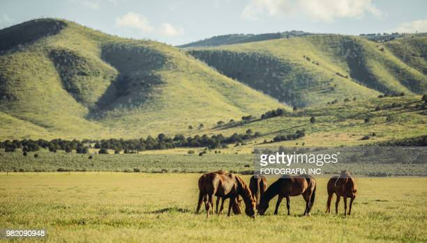60 Top Wild Horses Pictures Photos Amp Images Getty Images
