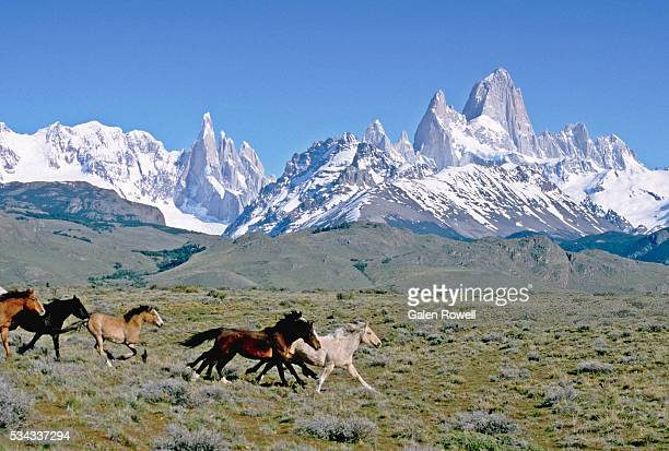 wild horses in valley below mount fitz roy, patagonia - animals in the wild stock pictures, royalty-free photos & images