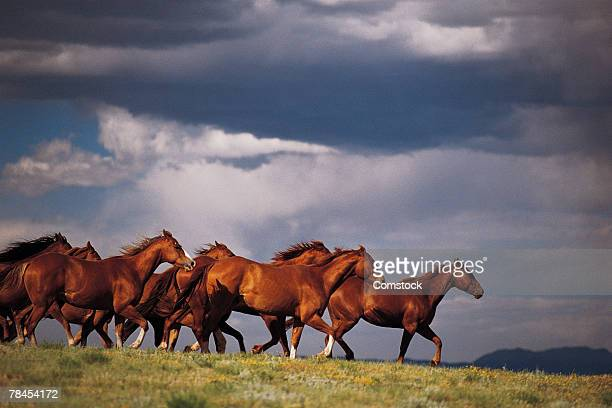 Wild horses near Fairplay in Colorado
