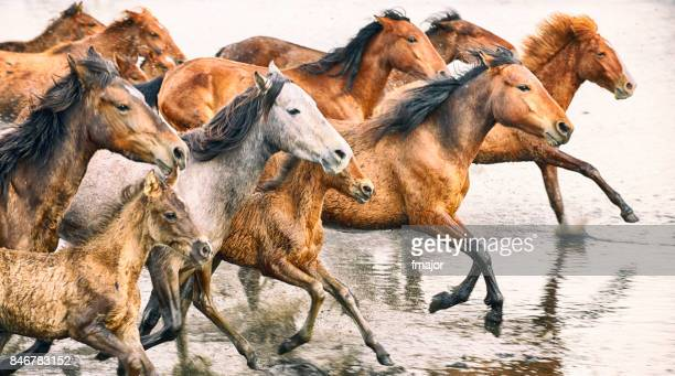 wild horses of anatolia - animals in the wild stock pictures, royalty-free photos & images