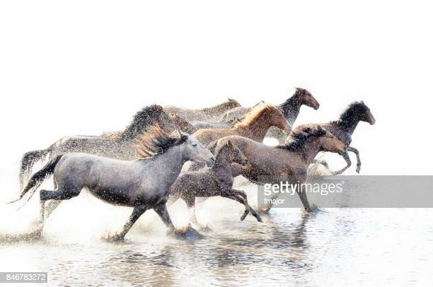 wild horses of anatolia - flexibility stock pictures, royalty-free photos & images