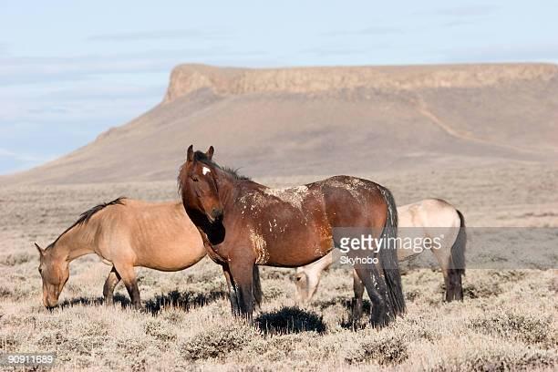 Wild Horses of Pilot Butte