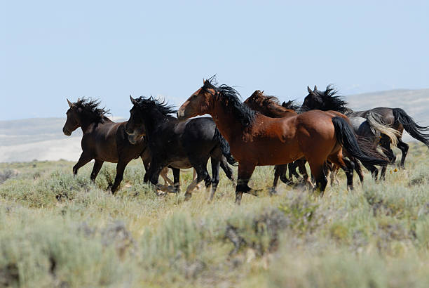Wild Horses Of Wyoming Wall Art