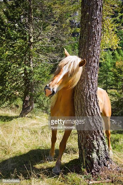 wild horses on mountain