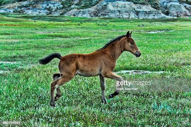 Wild Horses on the range