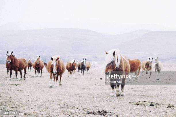 wild horses - zoology stock pictures, royalty-free photos & images