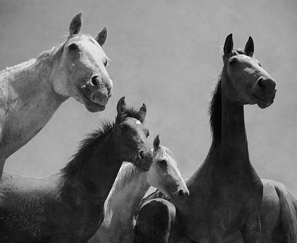 Wild horses portrait