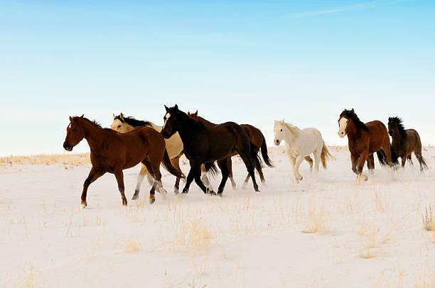 Wild Horses Running Across A Snowy Winter Swept  Desert Wall Art