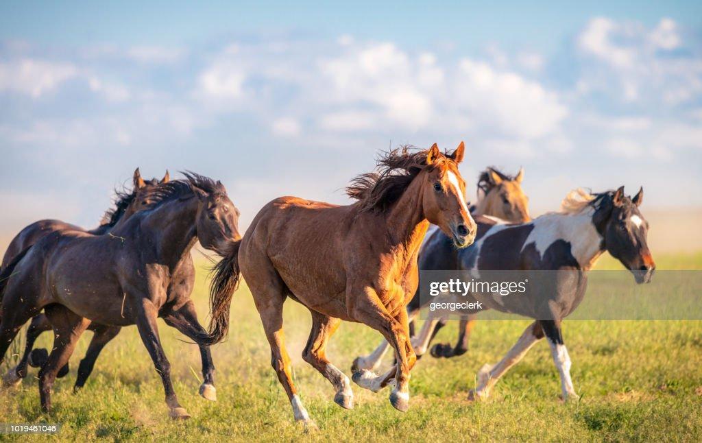 Wild horses running free : Foto de stock