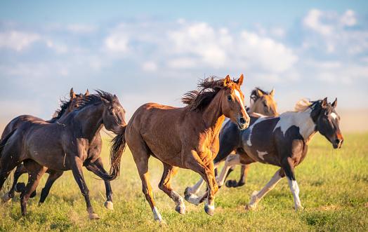 Wild horses running free 1019461046