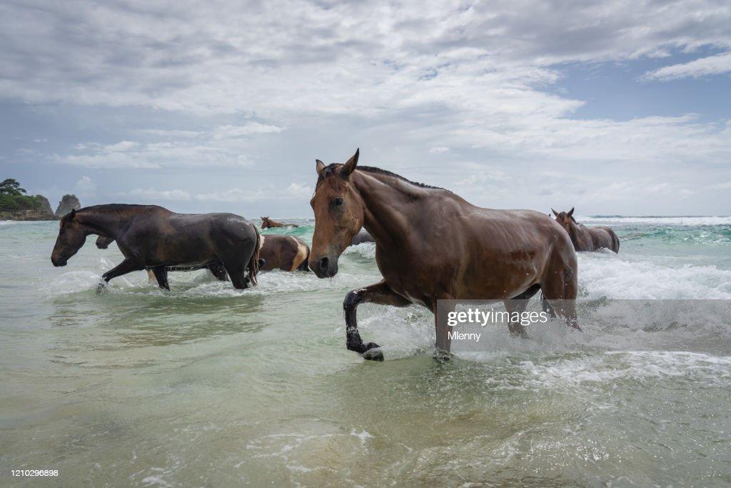 Wildpferde laufen vom Meer in Richtung Sumba Island Beach Indonesia : Stock-Foto