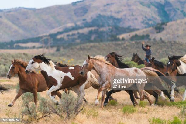Wild horses running in the foothills of a mountain