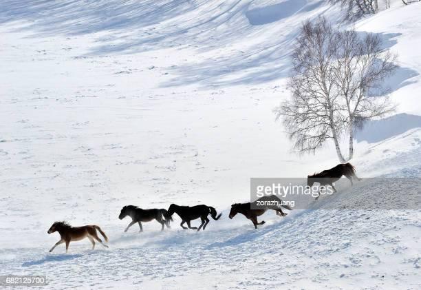 Wildpferde Laufen