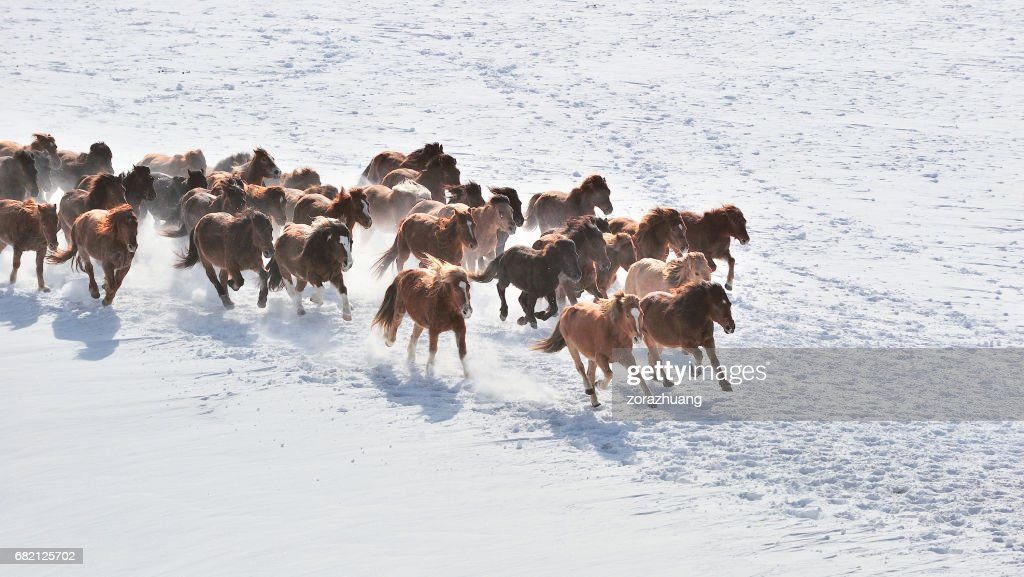 Wild Horses Running High Res Stock Photo Getty Images