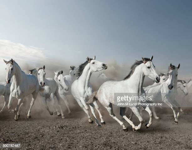 wild horses stampeding in desert - stampeding stock pictures, royalty-free photos & images