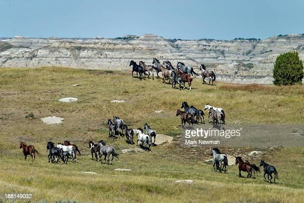 wild horses stampeding - north dakota stock pictures, royalty-free photos & images