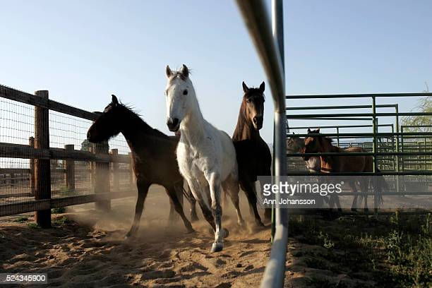 60 Top Horse Rescue Pictures, Photos and Images - Getty Images