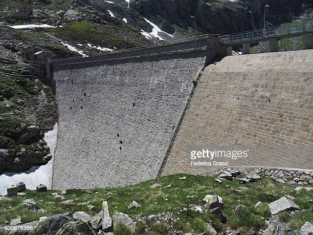 Wild Ibex Goats Climbing On Steep Dam Wall To Lick The Mineral Salts