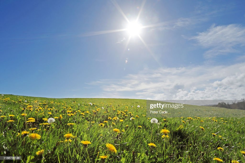 Wild meadow on summers day : Stock Photo