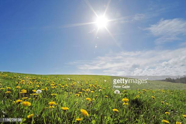 wild meadow on summers day - zonlicht stockfoto's en -beelden