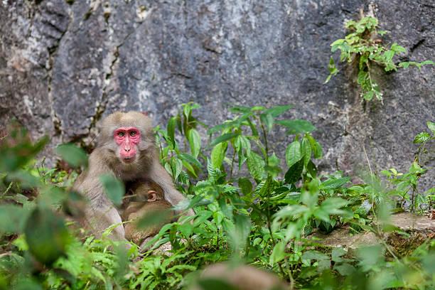 Wild Monkey Nursing Wall Art