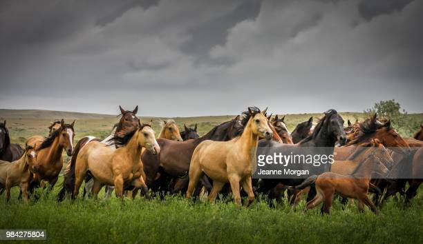 wild montana horses in rainstorm - animals in the wild stock pictures, royalty-free photos & images