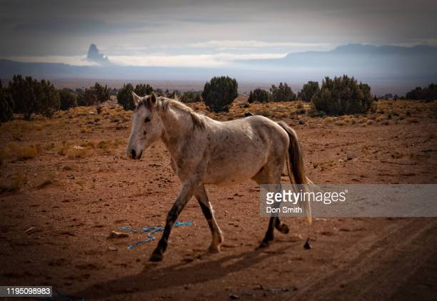 wild mustang and el capitan, monument valley - don smith stock pictures, royalty-free photos & images