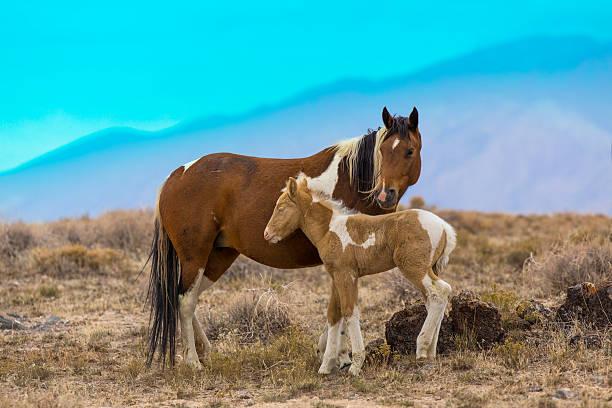 Wild Mustang Horses In The West Desert Of Utah Wall Art
