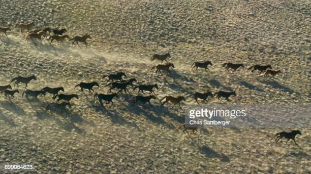 Wild mustangs running in landscape
