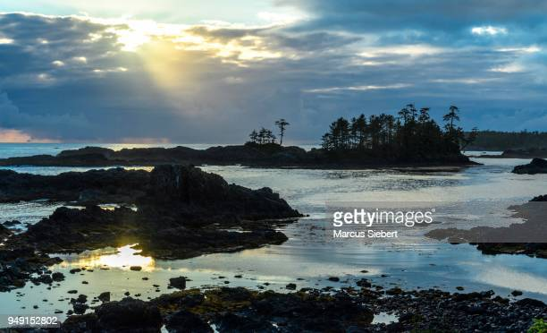wild pacific trail, ucluelet, vancouver island, britisch-kolumbien, kanada - kanada stock pictures, royalty-free photos & images