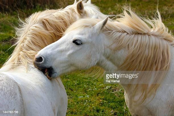 Wild Ponies Grooming