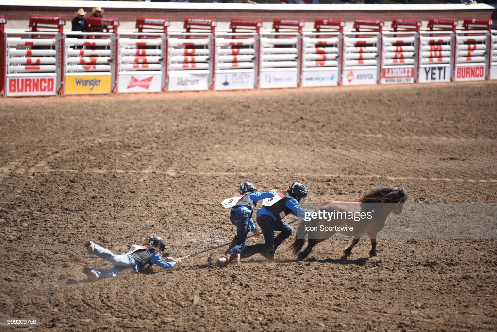Wild pony riders chase after this animal at the Calgary