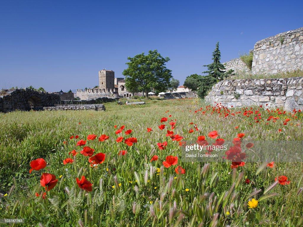 Wild Poppies Growing In Field Near Castle In Trujillos Upper Town