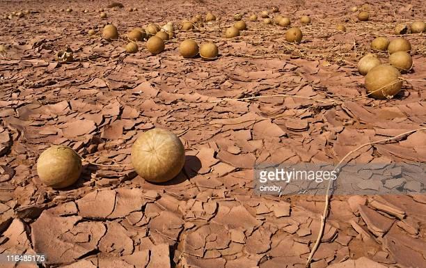 Les Populations sauvage séché pastèque