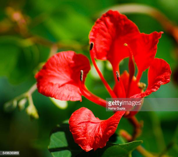 wild red - neha gupta stock pictures, royalty-free photos & images